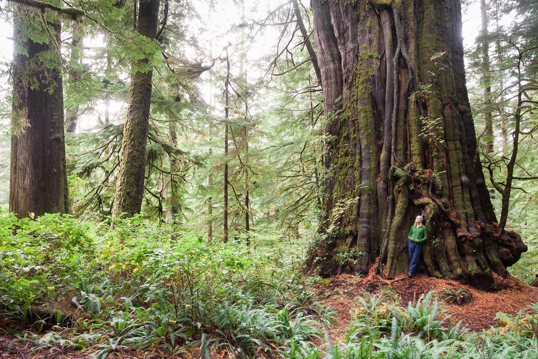 cheewhat-cedar-canadas-largest-tree.jpg