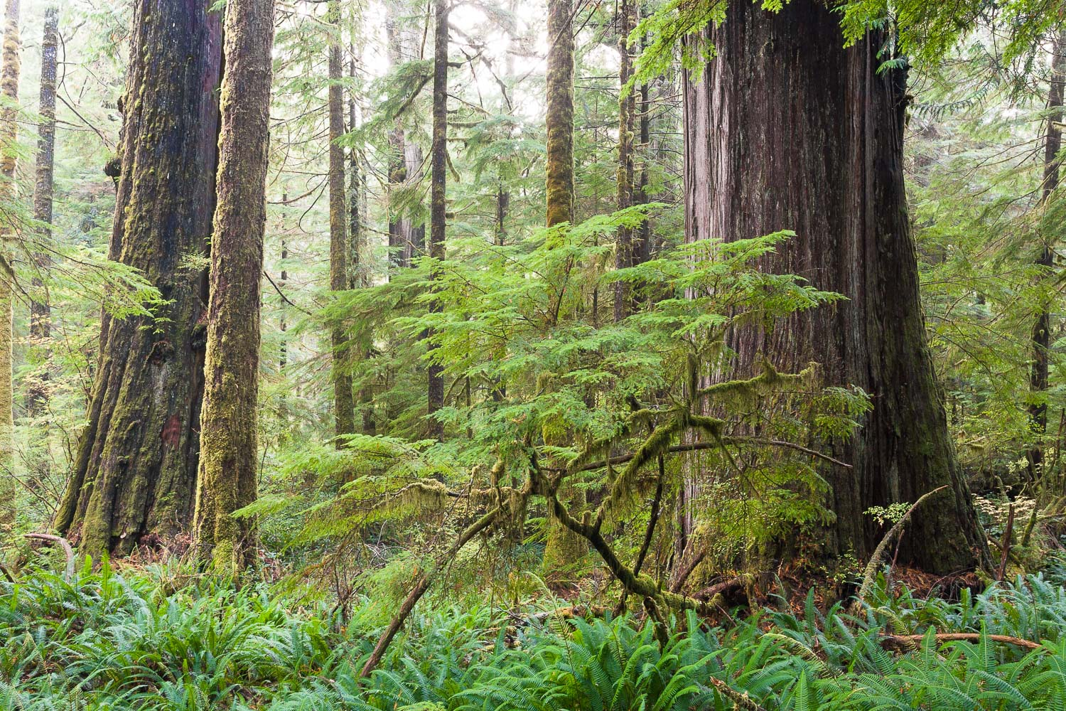 old-growth-pacific-rim-national-park.jpg