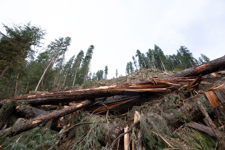 nahmint-valley-old-growth-logging-after.jpg