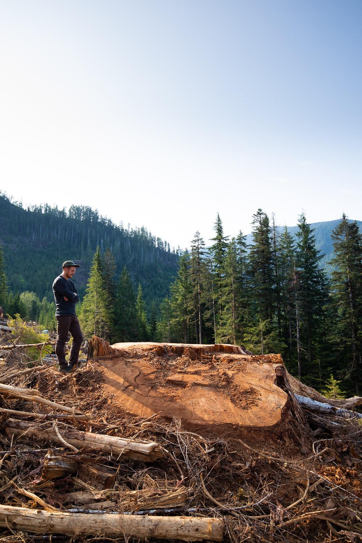 nahmint-valley-record-fir-tree-after.jpg