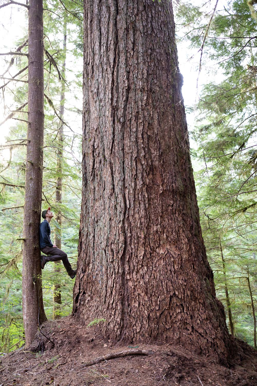 nahmint-valley-record-fir-tree-before.jpg