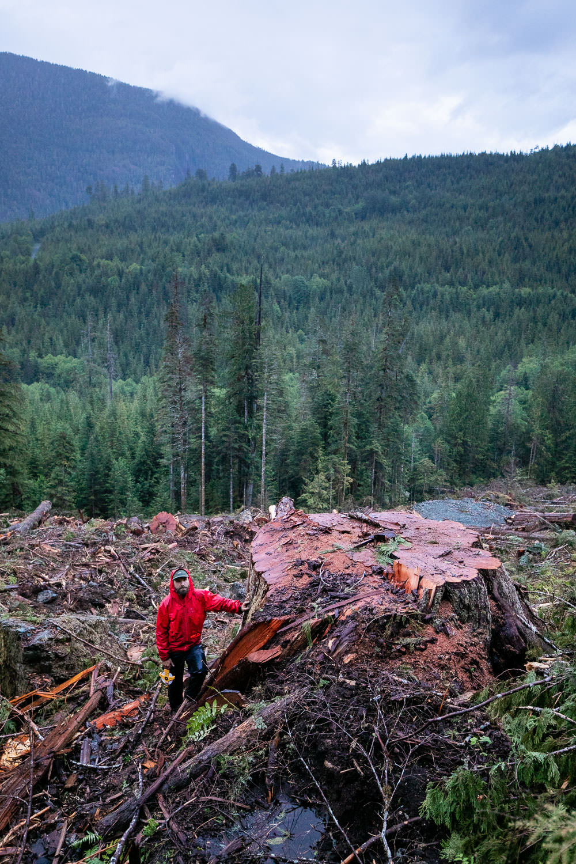 nahmint-valley-cedar-tree-after.jpg