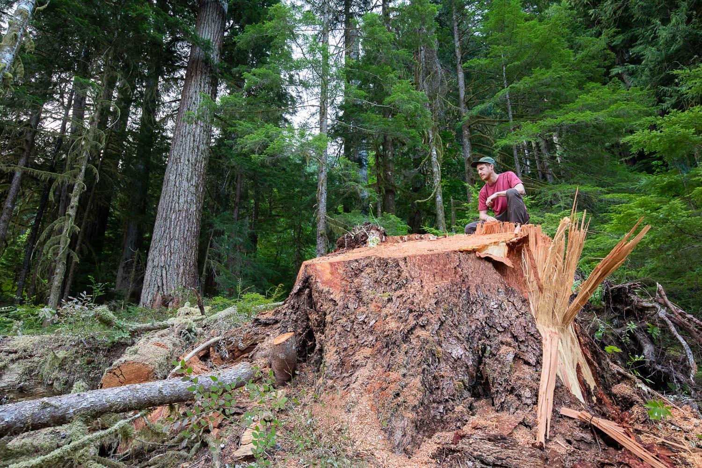 nahmint-valley-douglas-fir-tree-after.jpg