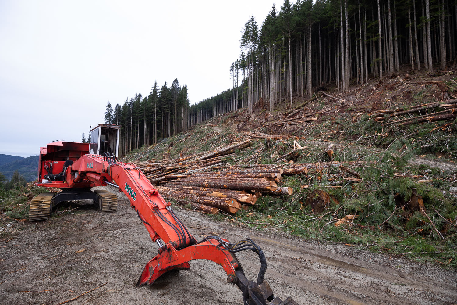 edinburgh-mt-logging-1.jpg