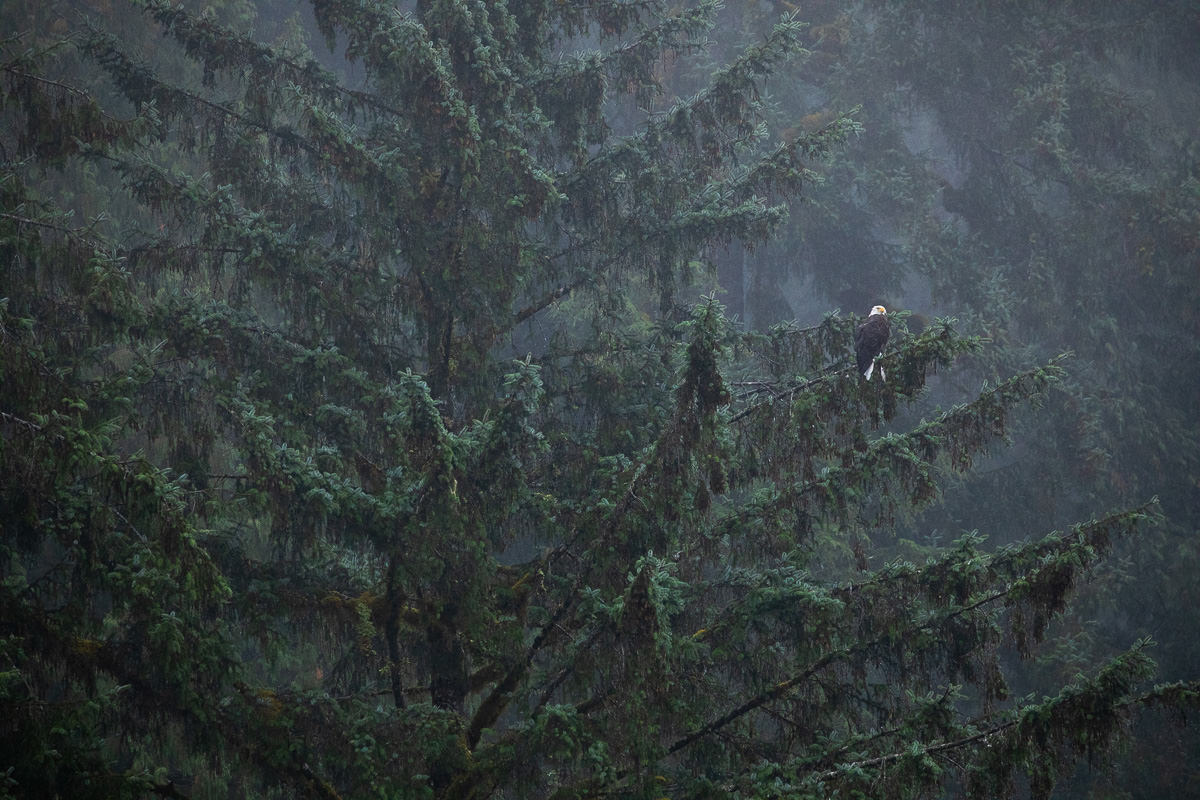 Great-Bear-Rainforest-1-Sept-2018-145.jpg