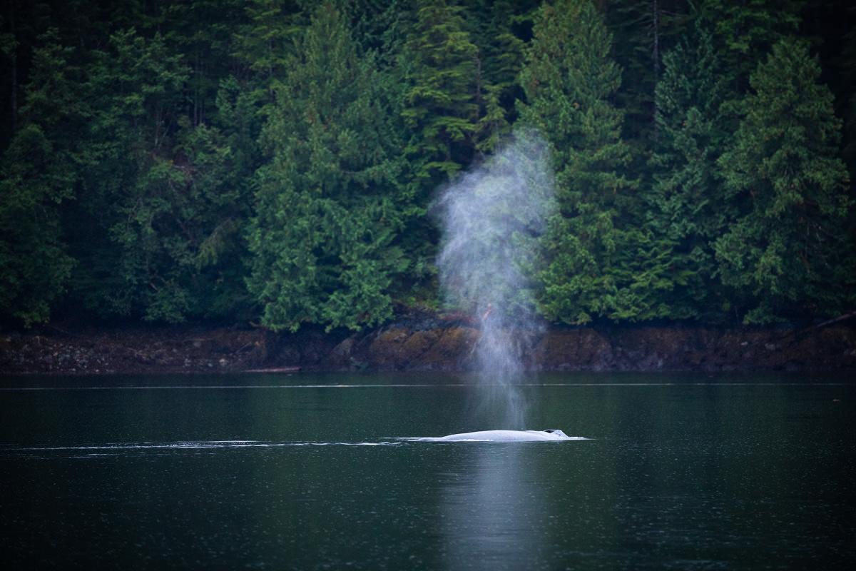 Great-Bear-Rainforest-1-Sept-2018-301.jpg