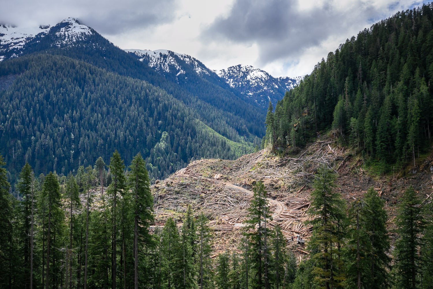 Nahmint-Valley-BCTS-Logging-May-2019.jpg