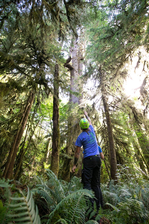 mossome-grove-sitka-spruce-tree-climb-2.jpg