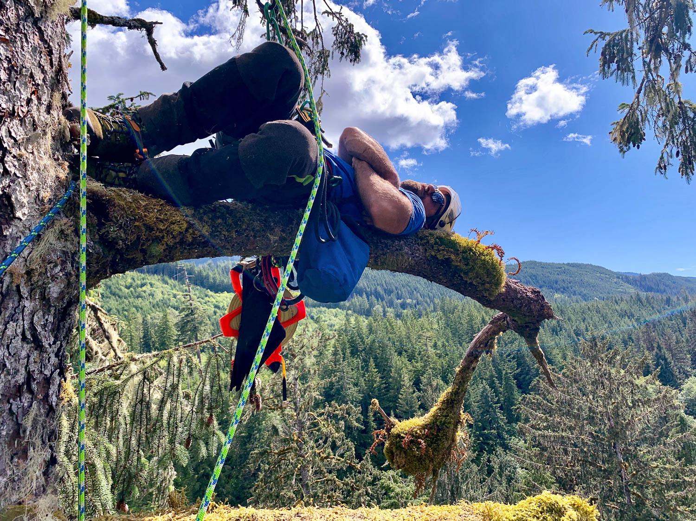 mossome-grove-sitka-spruce-tree-climb-14.jpg