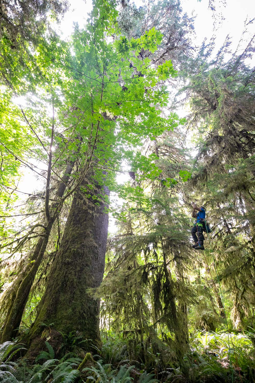 mossome-grove-sitka-spruce-tree-climb-30.jpg