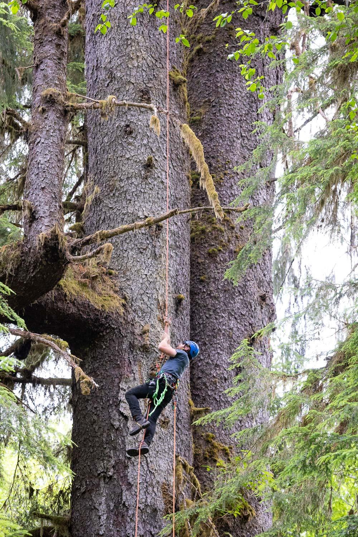 mossome-grove-sitka-spruce-tree-climb-101.jpg