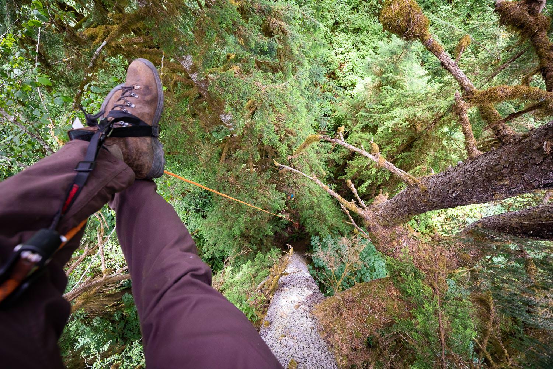 mossome-grove-sitka-spruce-tree-climb-161.jpg