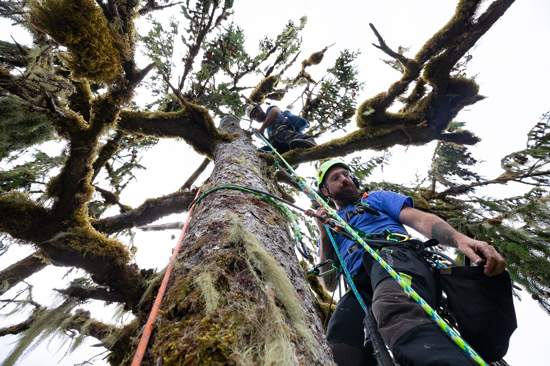 mossome-grove-sitka-spruce-tree-climb-180.jpg