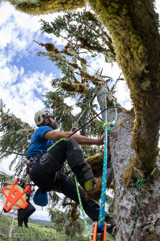 mossome-grove-sitka-spruce-tree-climb-225.jpg