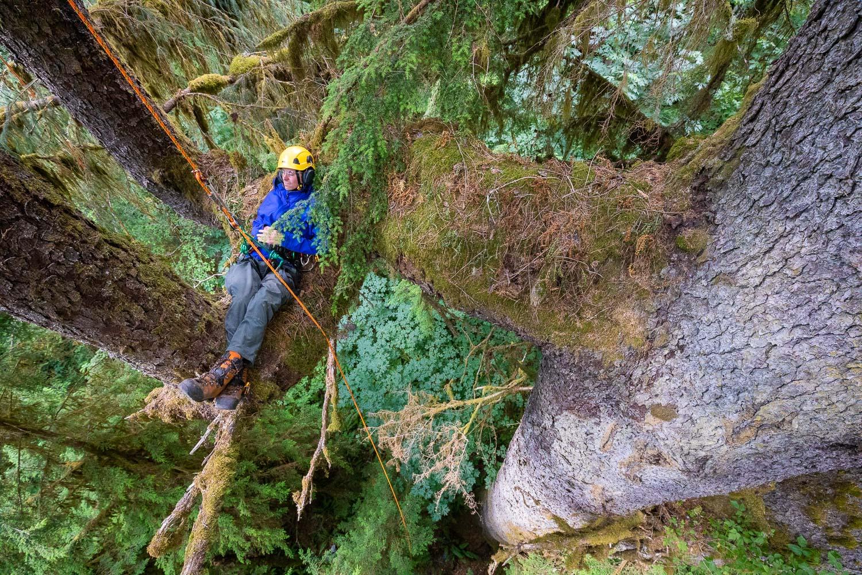 mossome-grove-sitka-spruce-tree-climb-276.jpg