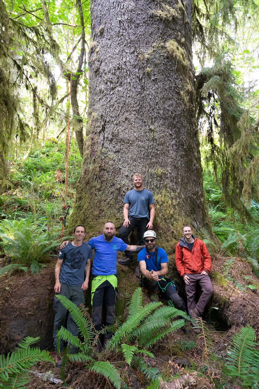 mossome-grove-sitka-spruce-tree-climb-319.jpg