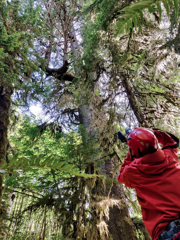 mossome-grove-sitka-spruce-tree-climb-104419.jpg
