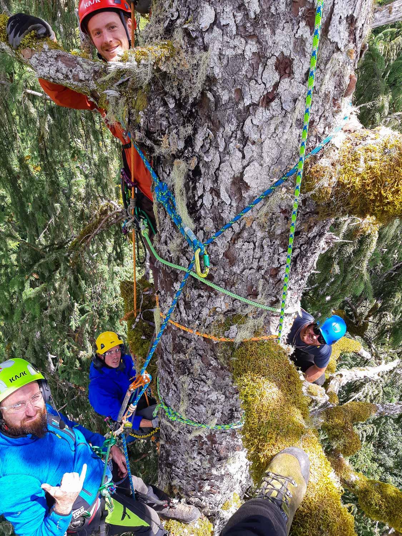 mossome-grove-sitka-spruce-tree-climb-150045.jpg