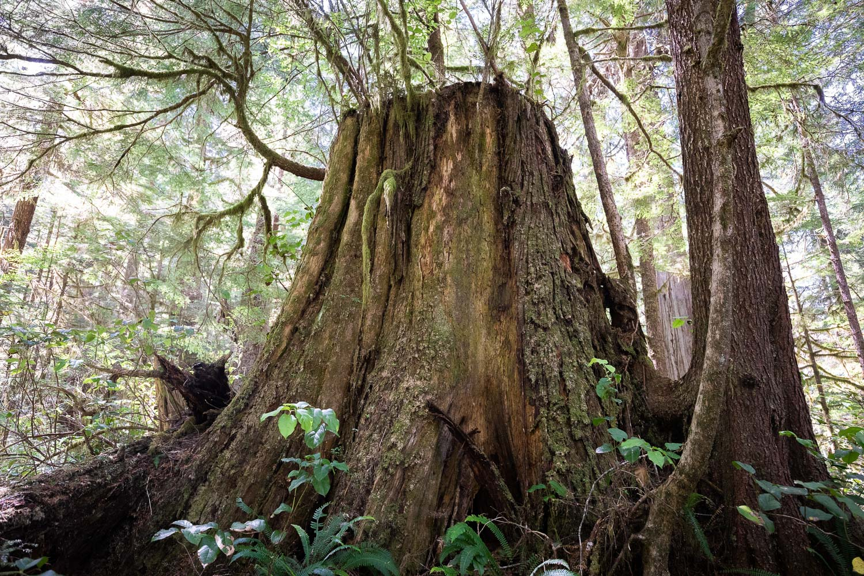 CMT stump