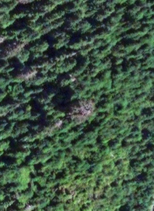 Big-Tree-Aerial-2.jpg