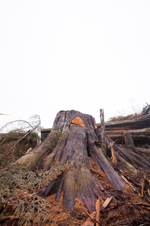 Edinburgh-Mt-2-After-Logging.jpg