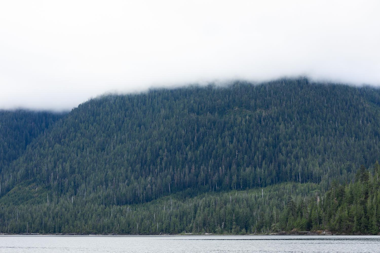 nahmint-lake-logging-1-before.jpg