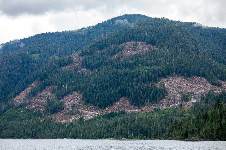 nahmint-lake-logging-2-after.jpg