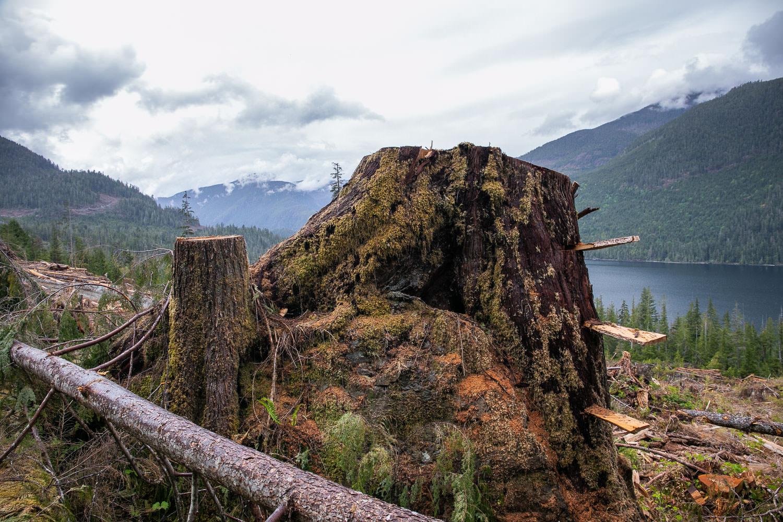 nahmint-valley-cedar-rock-4-after.jpg