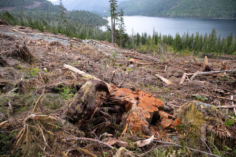 nahmint-cedar-forest-2-after.jpg