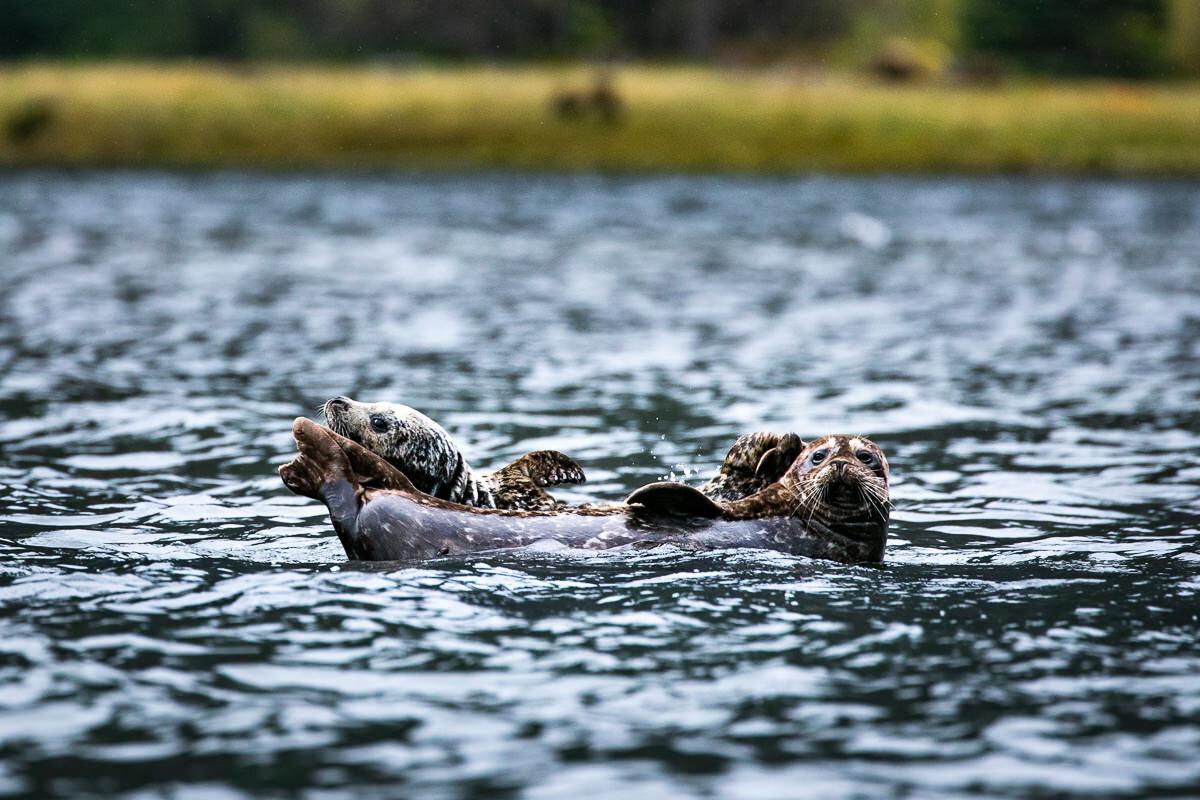 Rafting seals