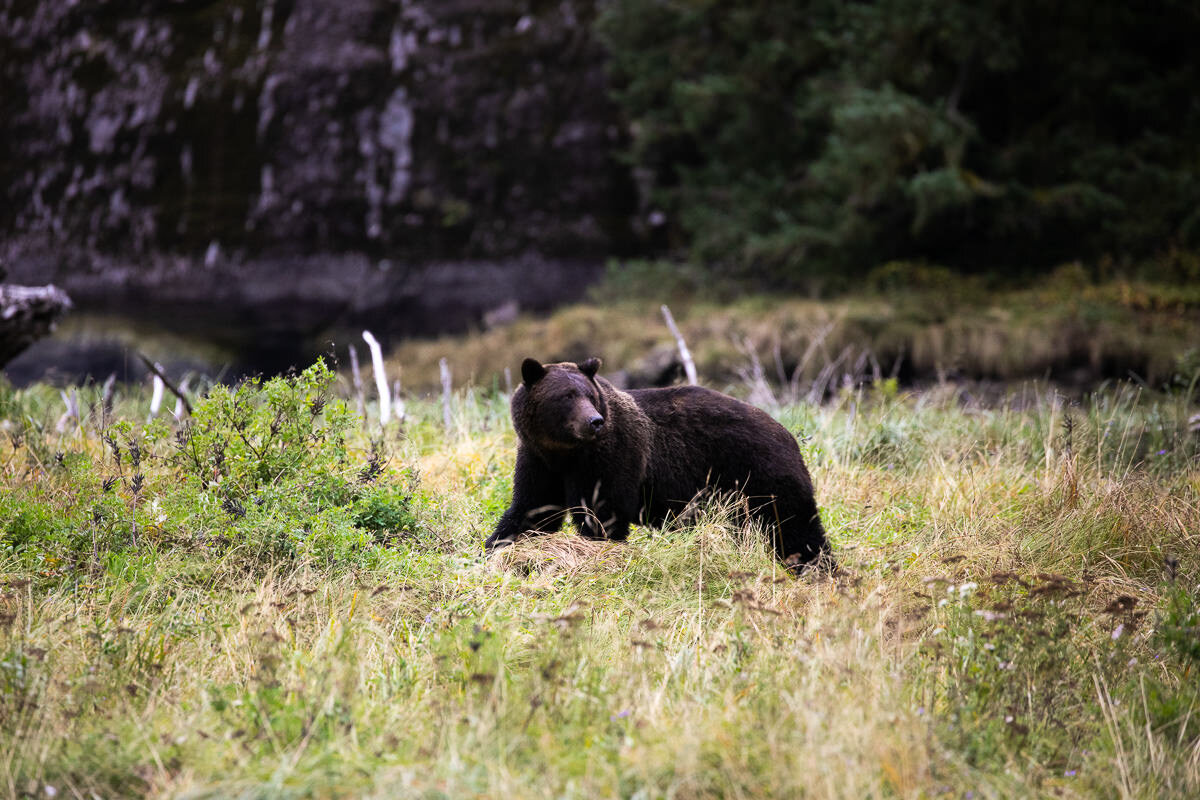 Great-Bear-Rainforest-2-Sept-282.jpg