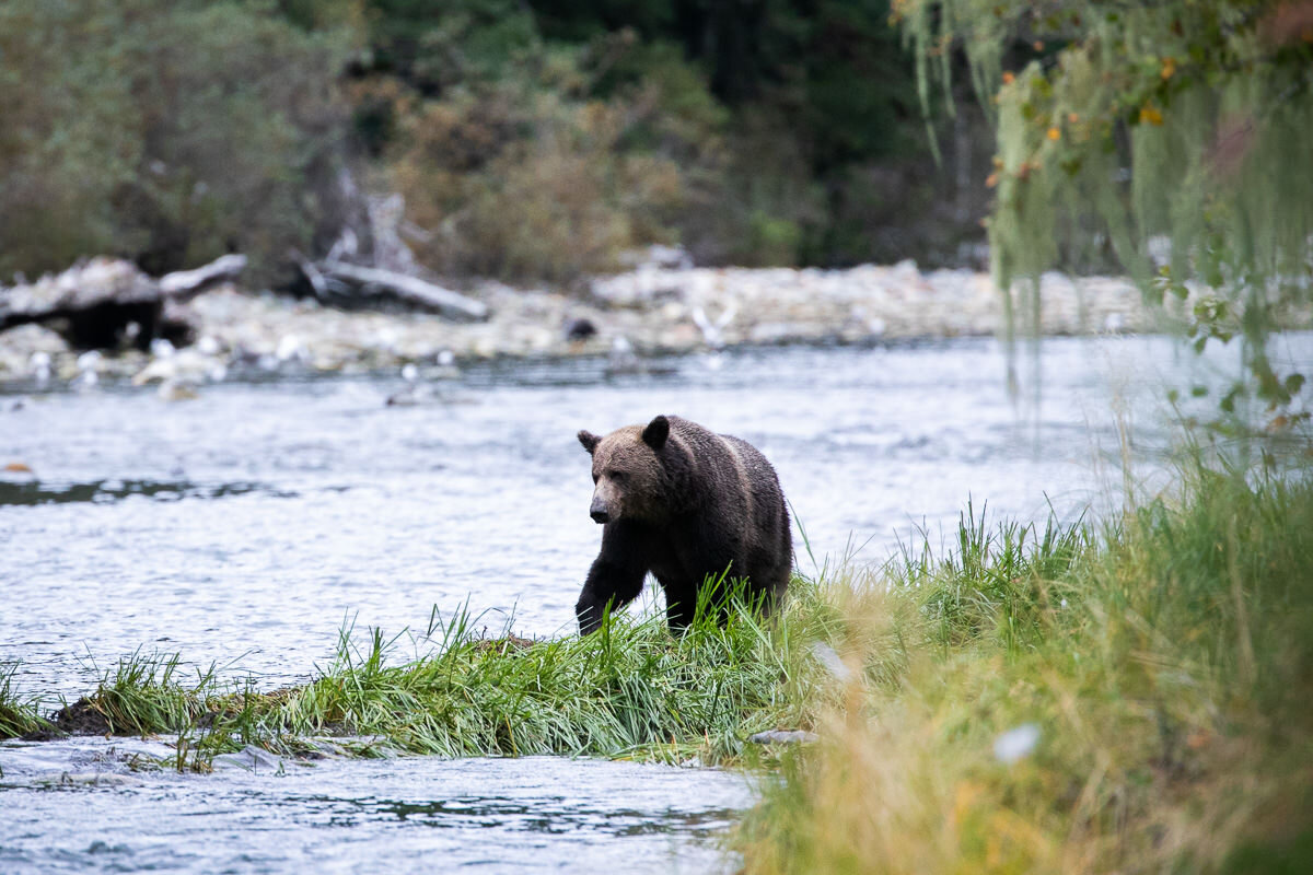 Great-Bear-Rainforest-2-Sept-239.jpg