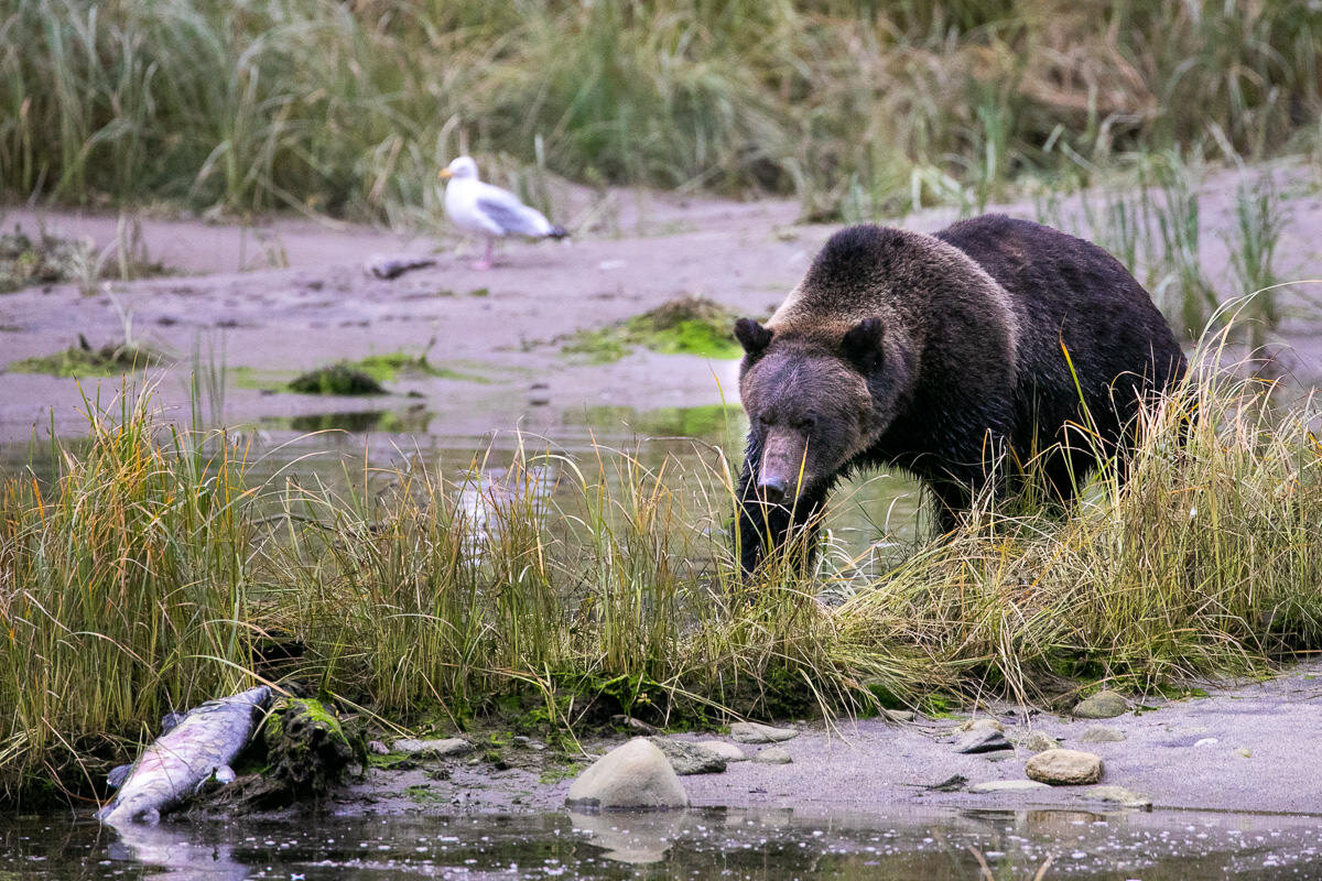 Great-Bear-Rainforest-2-Sept-293.jpg