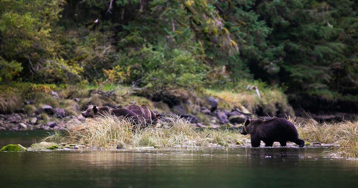 Great-Bear-Rainforest-2-Sept-304.jpg
