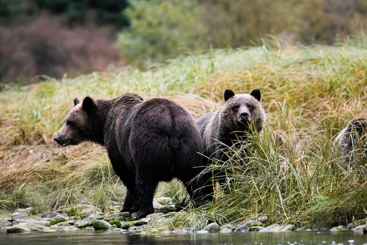 Great-Bear-Rainforest-2-Sept-309.jpg