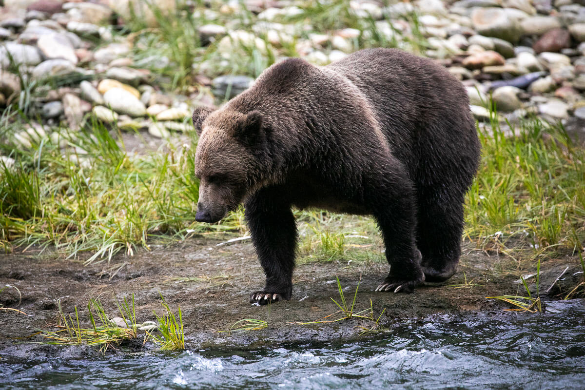 Great-Bear-Rainforest-2-Sept-341.jpg