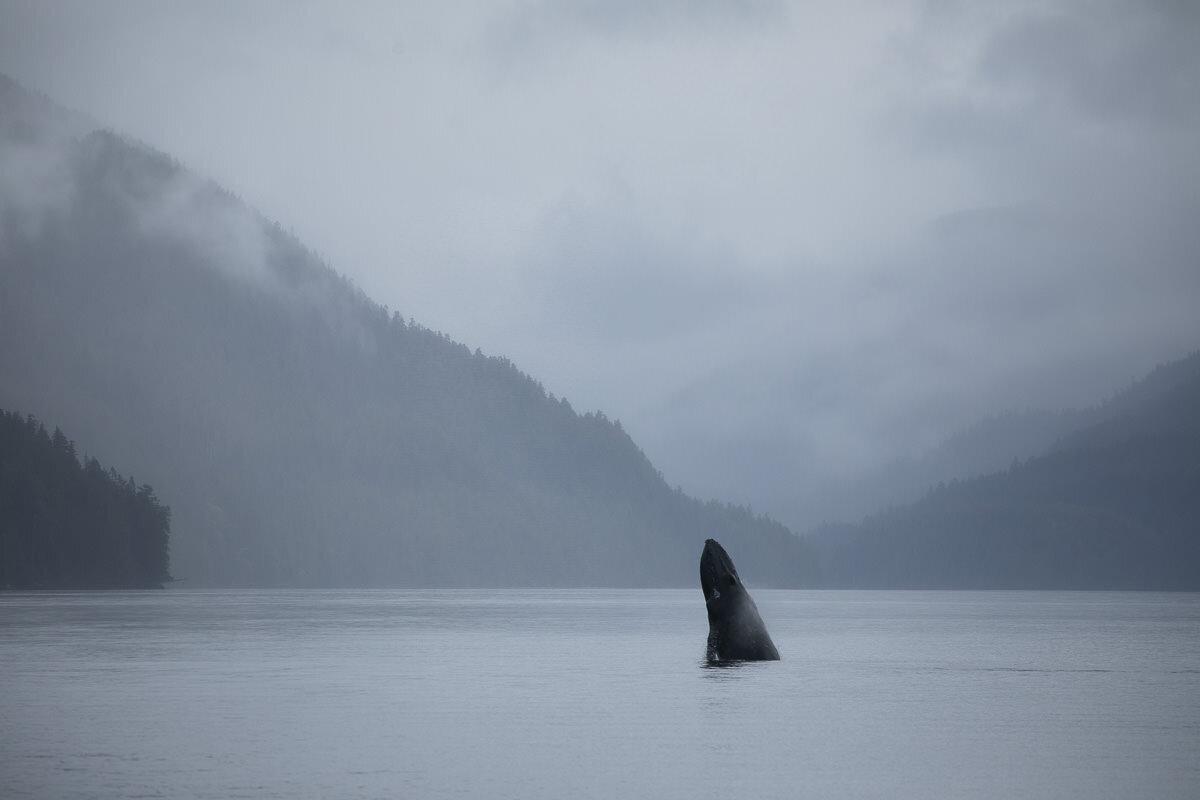Great-Bear-Rainforest-2-Sept-525.jpg
