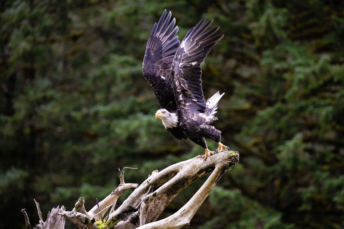 Great-Bear-Rainforest-2-Sept-614.jpg
