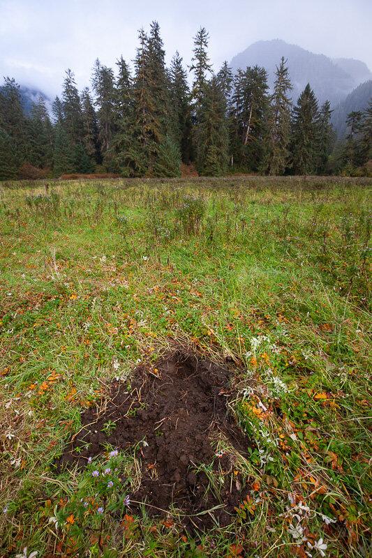 Great-Bear-Rainforest-2-Sept-716.jpg