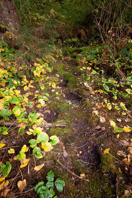 Gizzly bear stomp trail
