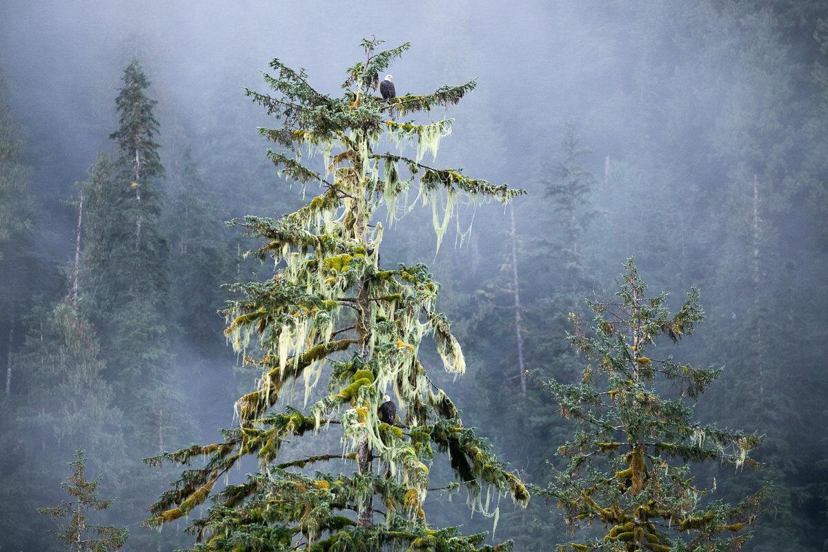 Great-Bear-Rainforest-2-Sept-741.jpg