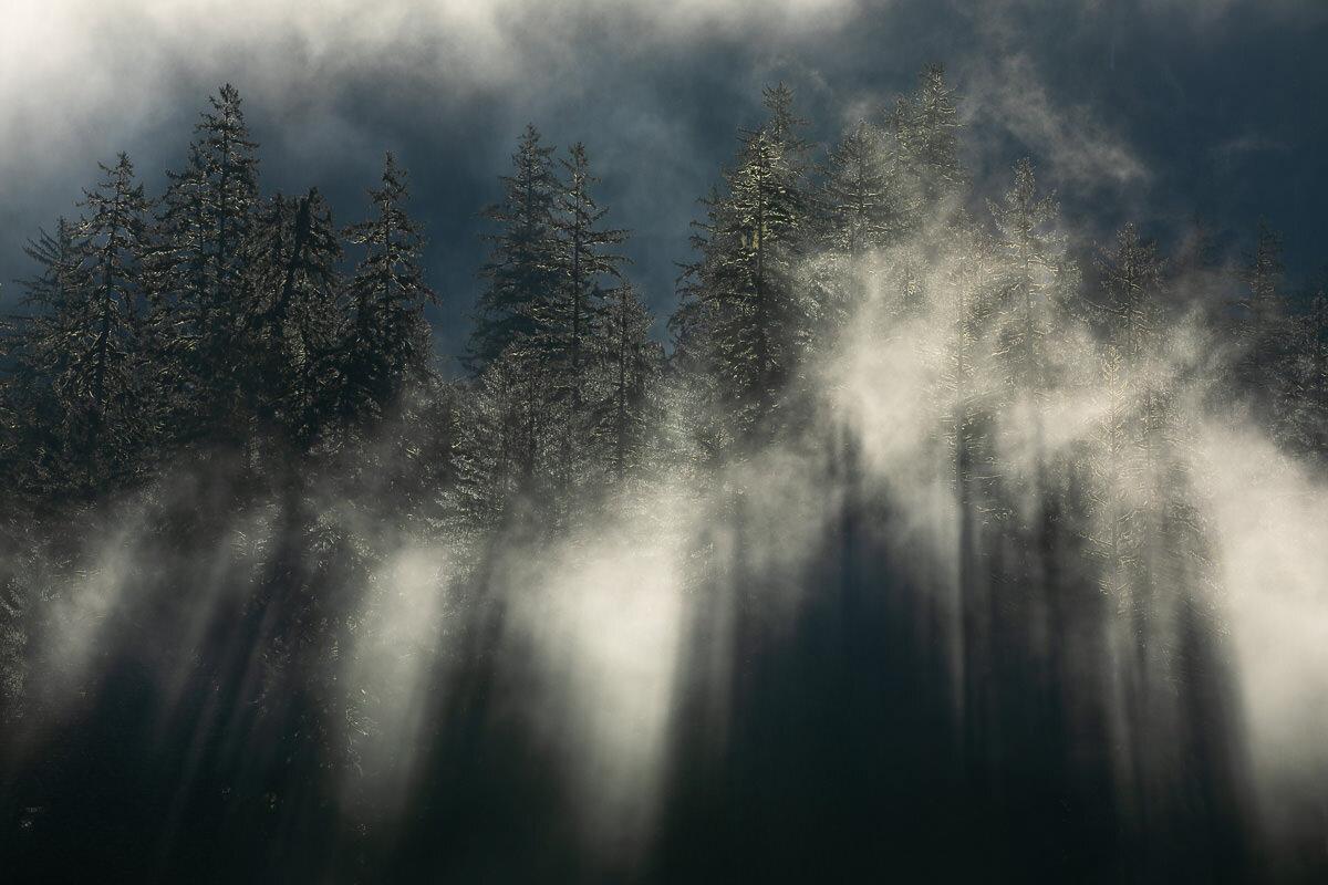 Great-Bear-Rainforest-2-Sept-838.jpg