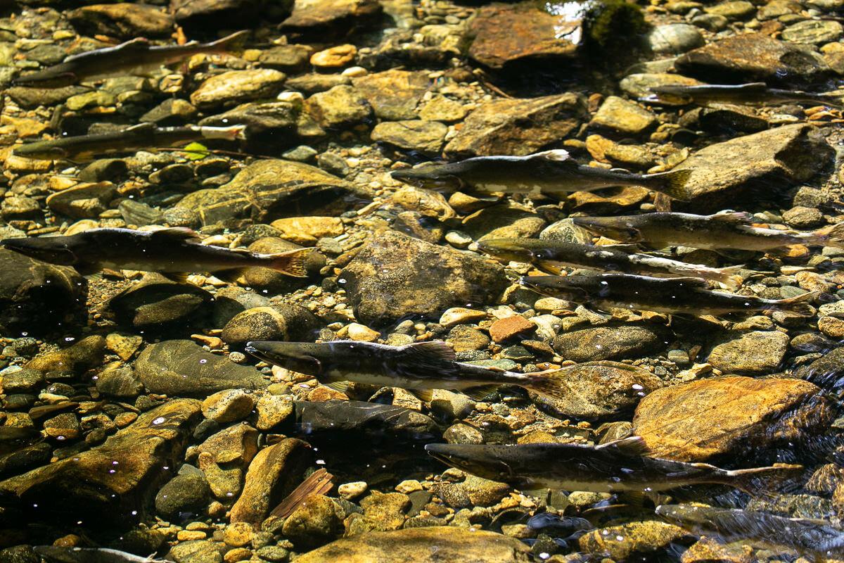 Great-Bear-Rainforest-2-Sept-1303.jpg