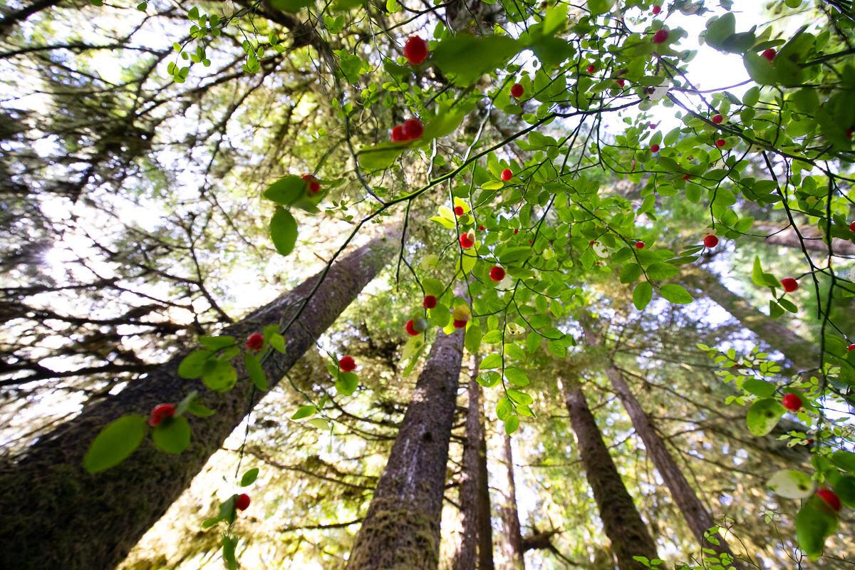 Great-Bear-Rainforest-2-Sept-1338.jpg
