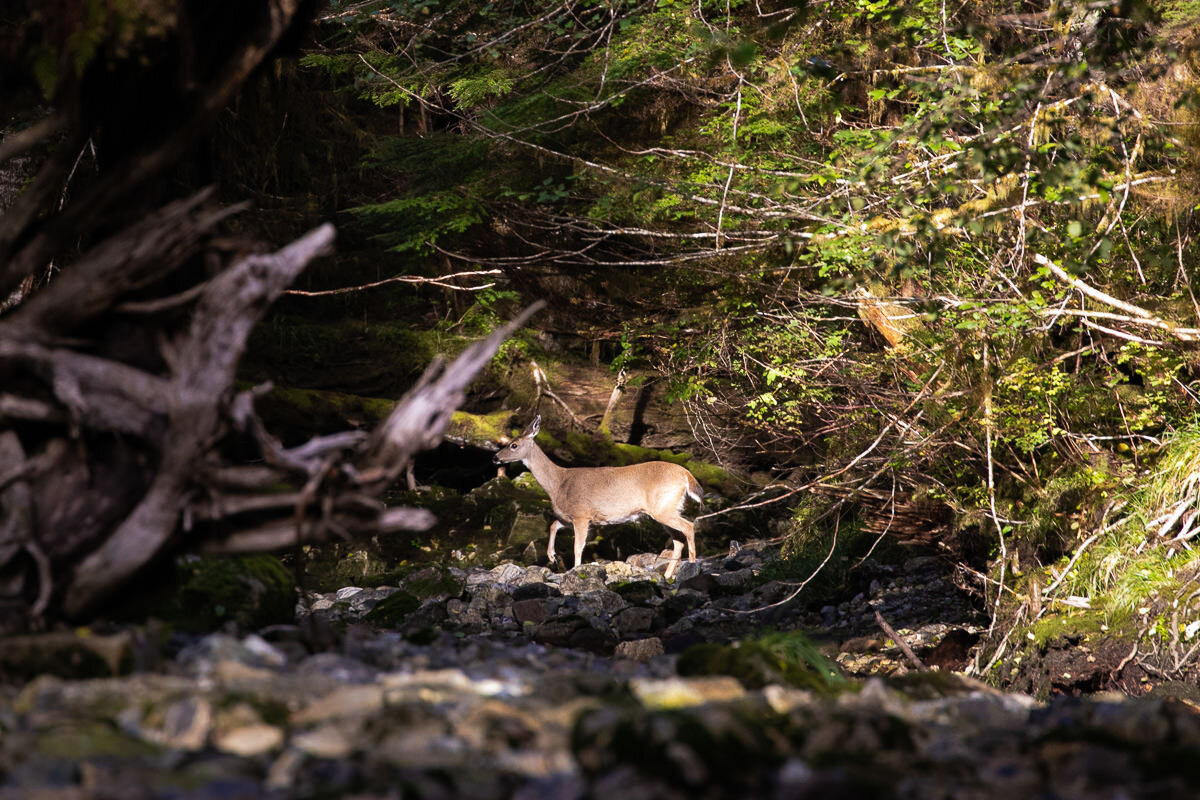 What seemed to be the rarest animal, a deer! We only saw one the whole trip!