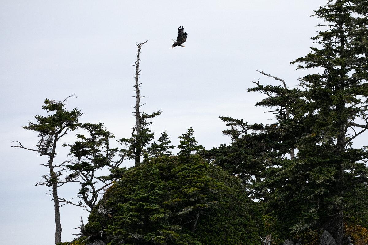 Great-Bear-Rainforest-2-Sept-2352.jpg