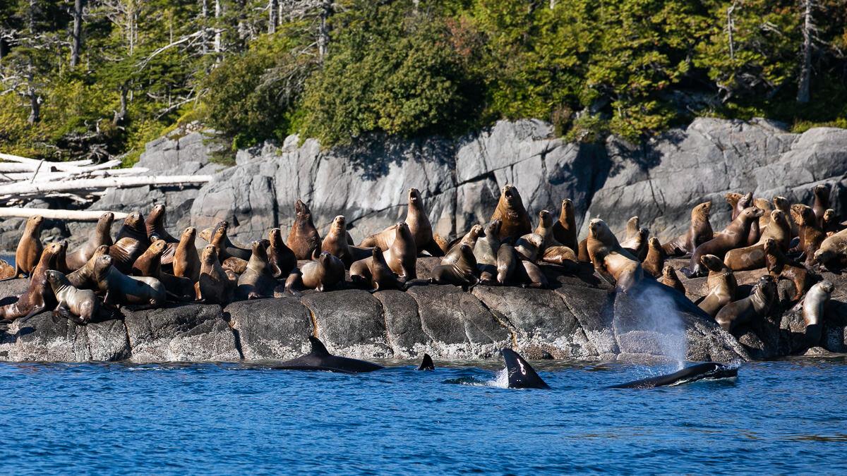 Great-Bear-Rainforest-2-Sept-2100.jpg