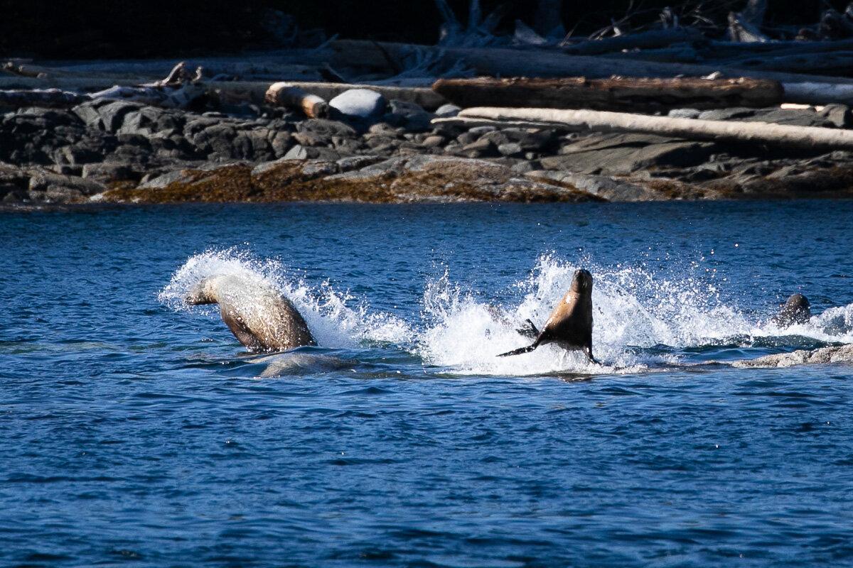 Great-Bear-Rainforest-2-Sept-2172.jpg