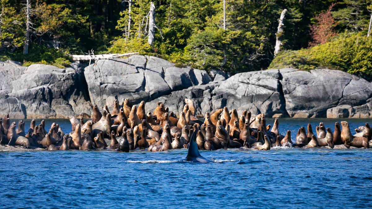 Great-Bear-Rainforest-2-Sept-2024.jpg
