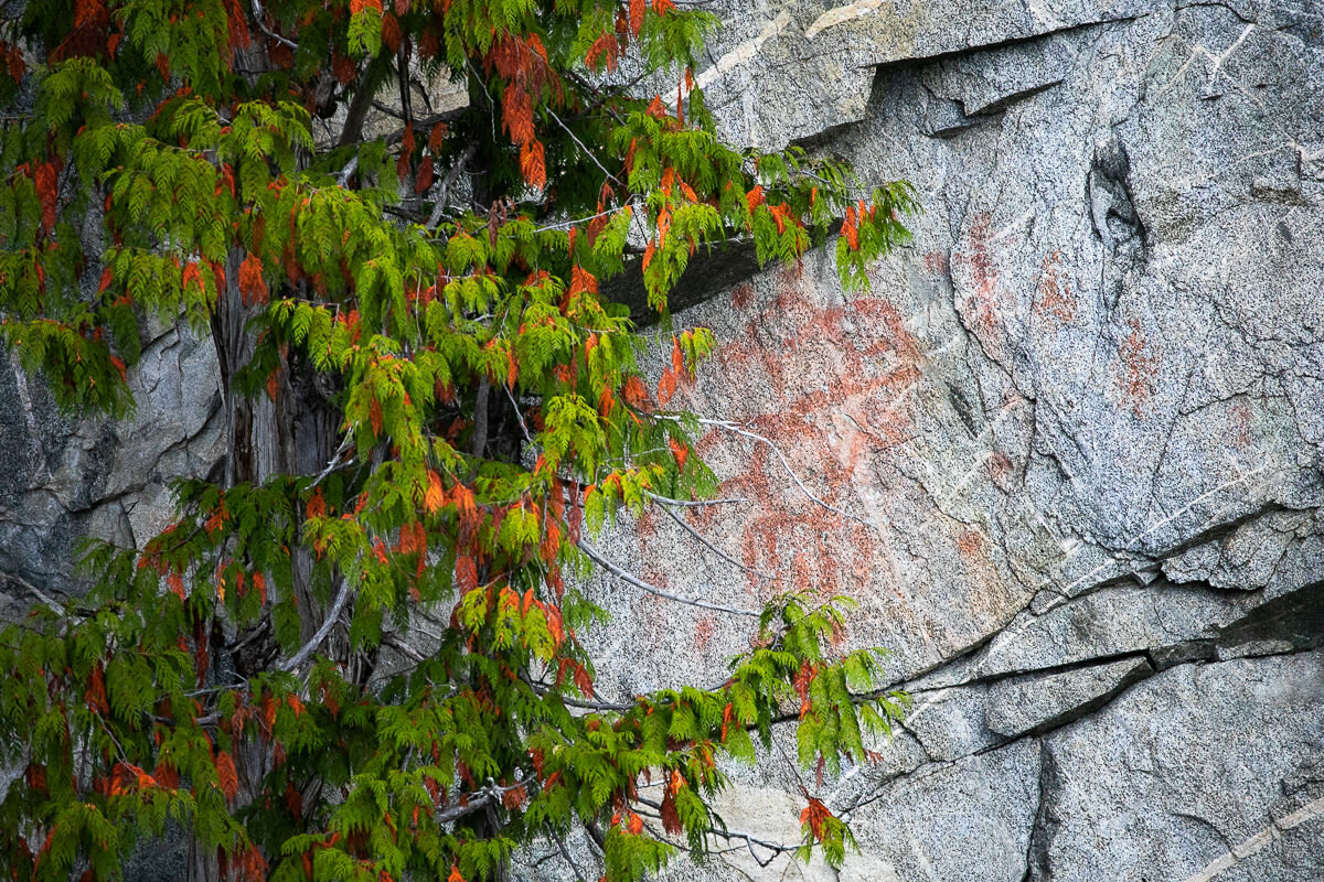 Great-Bear-Rainforest-2-Sept-138.jpg